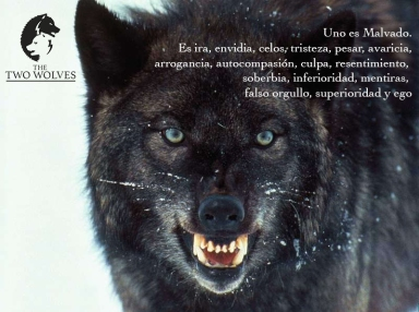 foto lobo negro